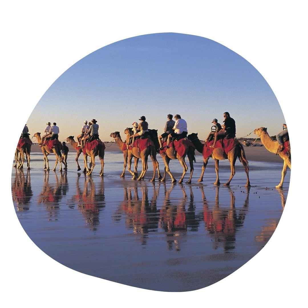 Camels in Australia